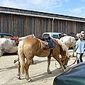 balade equestre gastronomique à La Lucerne d'Outremer (216)