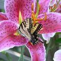 Butterfly (139)
