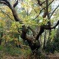 Lokoal - Forest