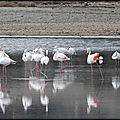 ESCALE__DES_FLAMANDS_ROSES_02_