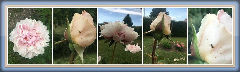 mon p'tit jardin Rp63