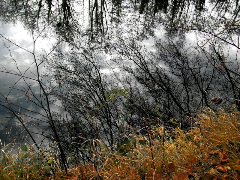 arbres se mirant dans la rivière