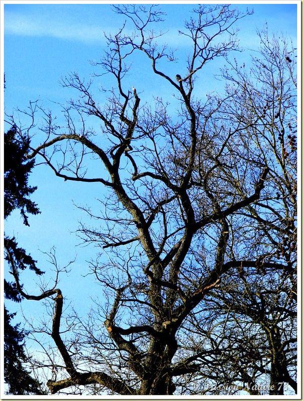 La forêt de Rambouillet vue sous un autre angle (14)