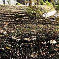 champignon-05931