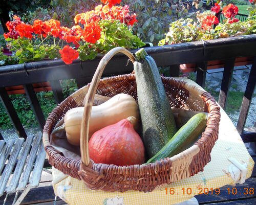 101619_courges