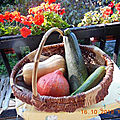 Courgettes, courges...