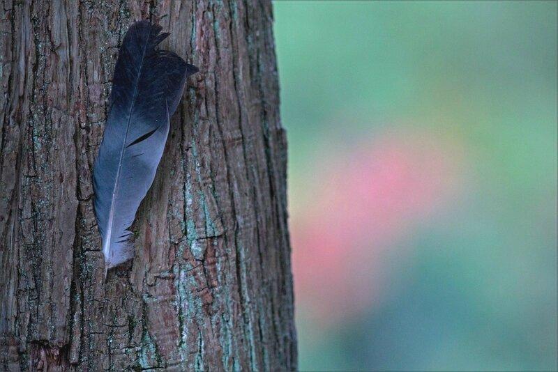 villle arbre plume couleurs plan 151016 1