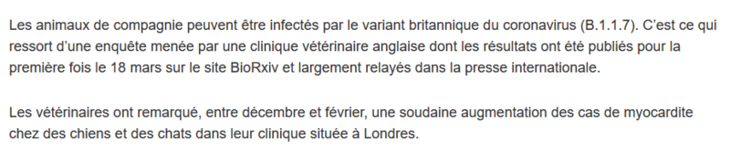 chats chiens 1