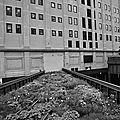 High Line (4)