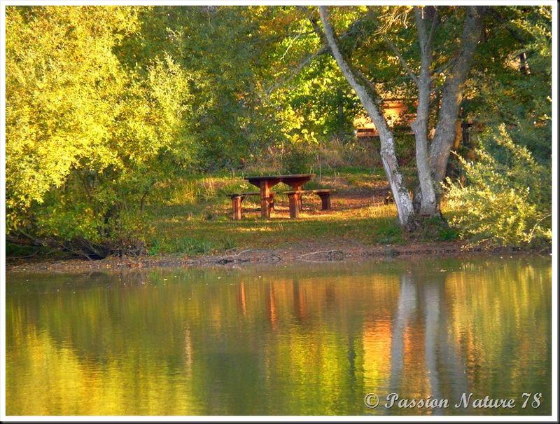 L'étang d'Or (11)