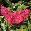 papillon_001