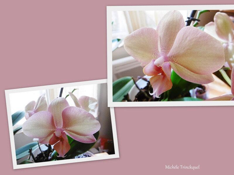 1-Orchidée rose 040419
