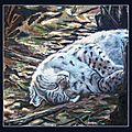 Le berceau de soleil - lynx boréal endormi - d'après photo P Raydelet - Détail Peinture à l'huile sur bois de coffrage