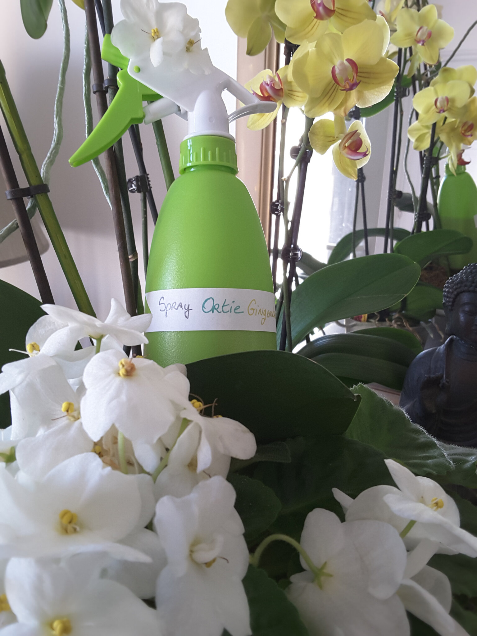 🌱 Spray à l'Ortie pour cheveux gras (macérât) et lutte contre les pellicules (lotion peaux grasses aussi 😉) 🎍