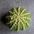 Gros cactus bicolore #cgc041