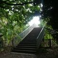 Le parc de Saint Cloud