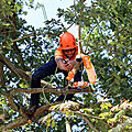 Etcc. european tree climbing championship 2018, parc de thoiry, france. journee qualificative du 30 juin 2018.