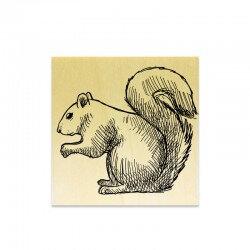 tampon-ecureuil