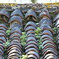 Nature sur toit...