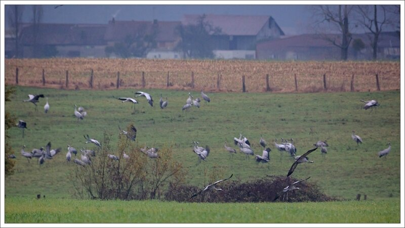 Montier lulu grues champ 211113 8 maisons