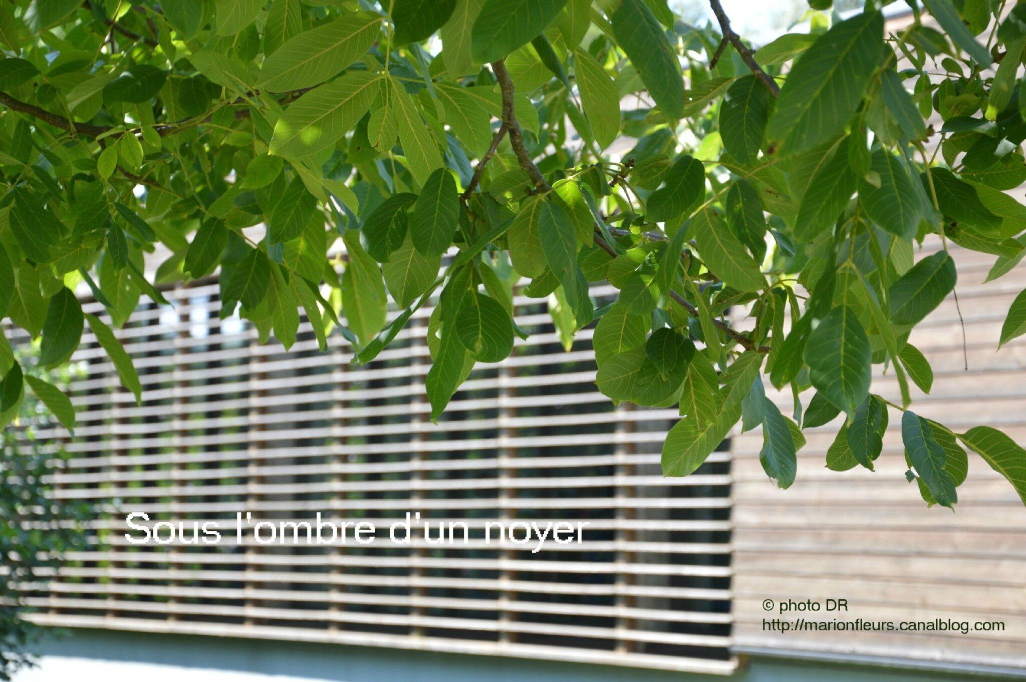 Goodie : calendrier-carnet de notes élixirs floraux du mois d'octobre + info sur l'essence du noyer / Fleur de Bach : Walnut