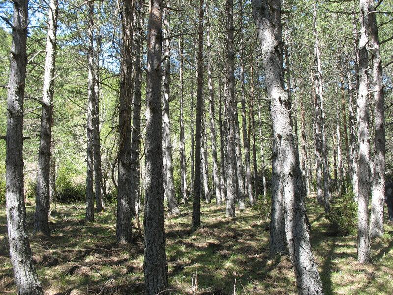 Larrosa, sur le sentier, arbres (Espagne)