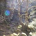 L'orbe de la forêt. ariège.