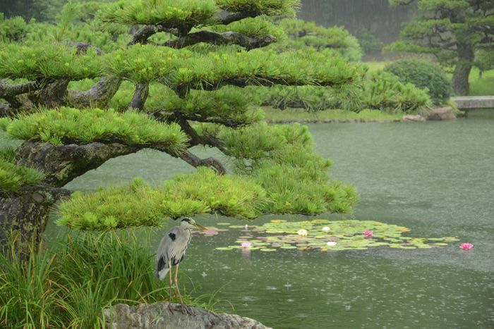 3 juillet Takamatsu Ritsurin 302