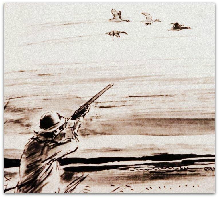 chasse au canard zz