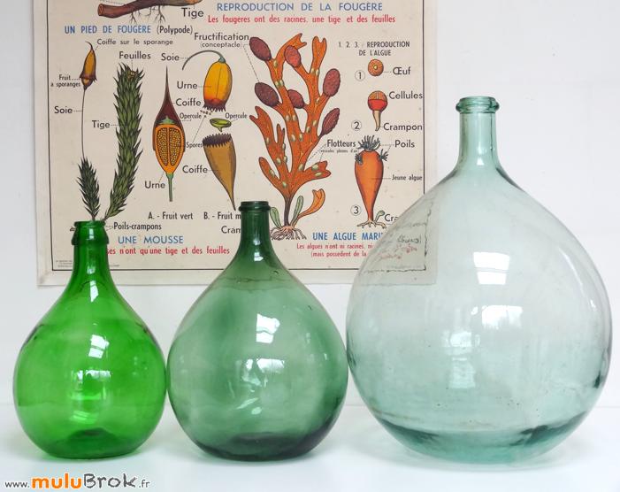 DAME-JEANNE-Bonbone-Affiche-PLANTES-3-muluBrok-Vintage