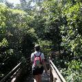 marche tropicale