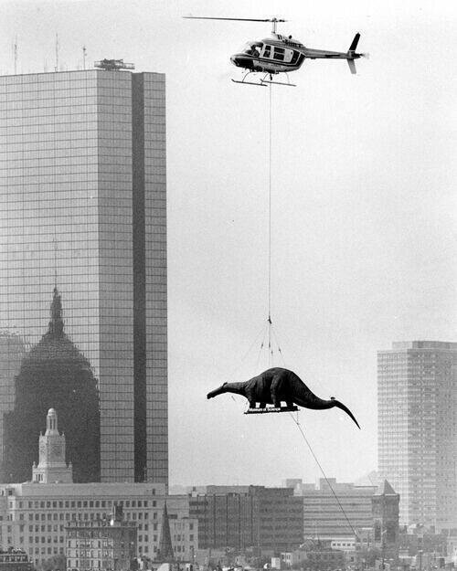 A dinosaur being delivered to the Boston Museum of Science