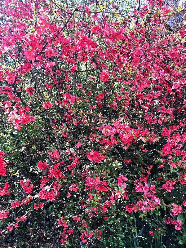 Ardèche-Pâques-familly-panier-flowers-home-ptit-dej-Easter-ma-rue-bric-a-brac