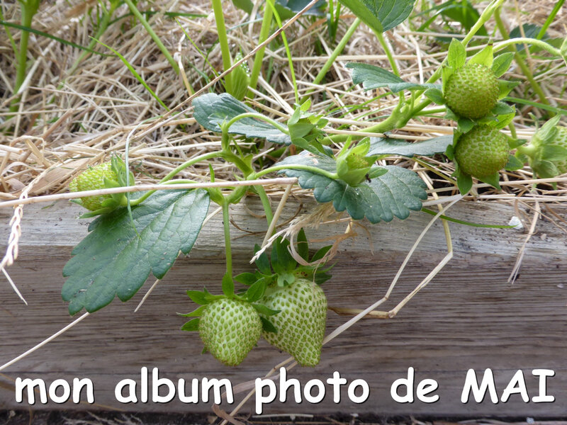 couverture album photos de mai