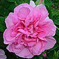 L' impératrice joséphine, une amoureuse des roses