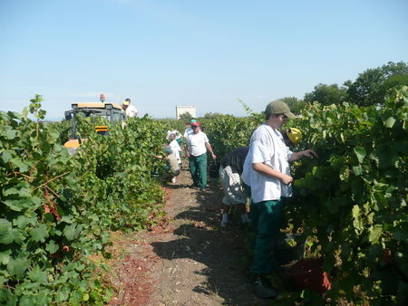 Vendanges_Maguelone_001