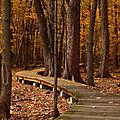 C'est l'automne, laissez tomber les feuilles. découvrez la formation itil® foundation paperless*