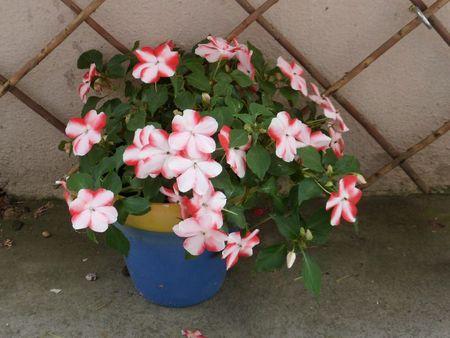 fleurs + tchernobil 004