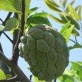 La pomme-cannelle