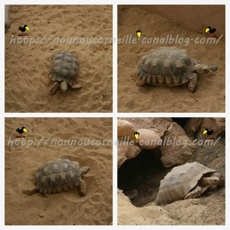 tortues ferme 4