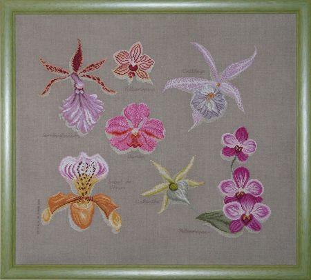 orchid_es___16_mains