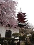 454_Temple_Senjokaku