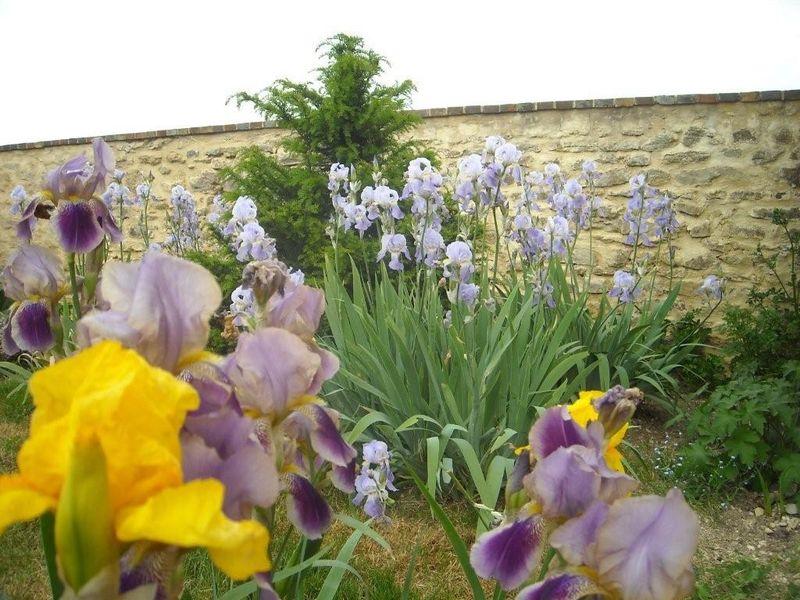 11 05 10 et encore des fleurs, même si le sol est sec.