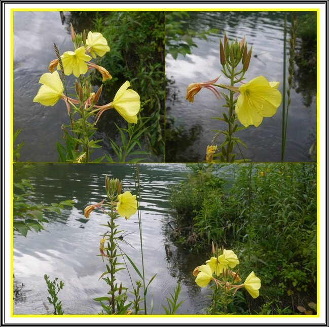 07 fleurs jaunes