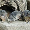 12 - Marmottes