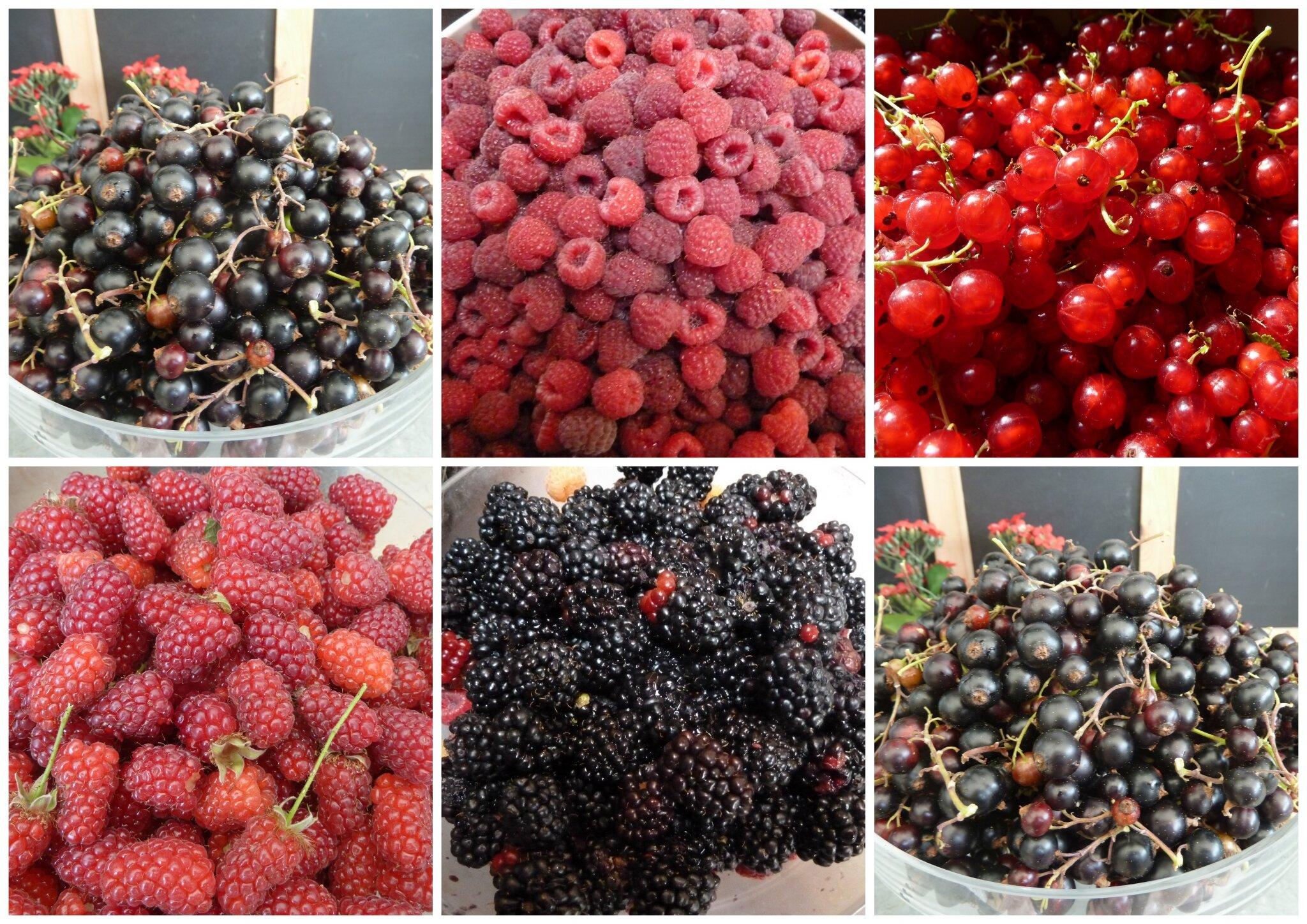 21 Novembre Pate De Fruits Je Me Lance Pour Savoir Il Faut