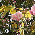 fleurs_careme-1 (17)