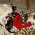 2008 04 05 Papillon et Blanco qui mange avec un petit chaton