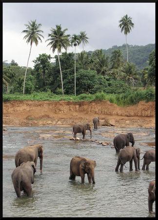 elephant_asie_4