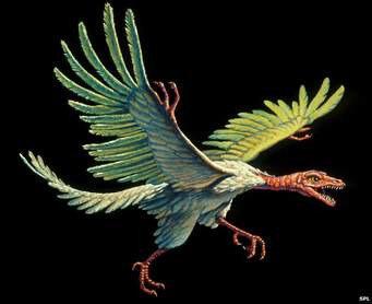 Archéopteryx, l'ancêtre